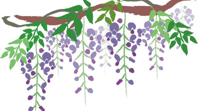 藤の花 おまつり